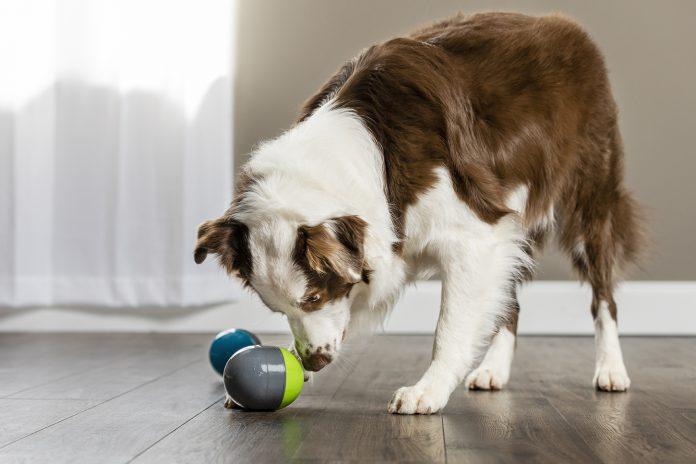 Dog Toys Australia